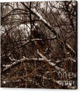 Beyond The Thicket - Abandoned Acrylic Print