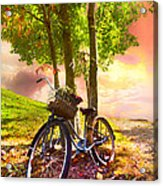 Bicycle Under The Tree Acrylic Print