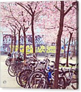 Bicycles Under The Blooming Trees. Pink Spring In Amsterdam  Acrylic Print