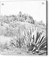 Bidwell Park Cactus Acrylic Print