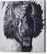 Big Bad Buffalo Acrylic Print