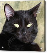 Big Bad Voodoo Kitty Acrylic Print