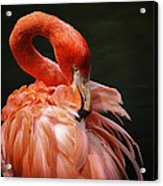 Big Bird Acrylic Print