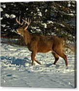 Big Boy In Early Winter Acrylic Print