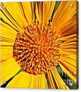 Big Bright Bold Acrylic Print