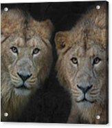 Big Brothers Acrylic Print