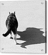Big Cat Ferocious Shadow Monochrome Acrylic Print