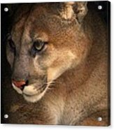 Big Cats In Ohio. No.20 Acrylic Print