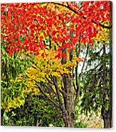Big Colorful Sleep Acrylic Print