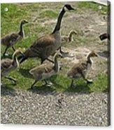 Big Family Crossing The Road Acrylic Print