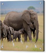 Big Family Acrylic Print