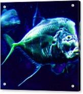 Big Fish Small Fish - Electric Acrylic Print
