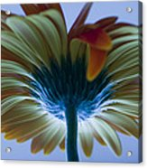 Big Flower Acrylic Print