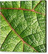 Big Green Leaf 5d22460 Acrylic Print