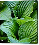 Tropical Green Leaves Acrylic Print