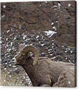 Big Horn Rams And Hoo Doos   #6587 Acrylic Print