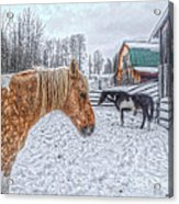 Big Horse  Little Horse Acrylic Print by Skye Ryan-Evans