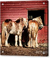 Big Horses Acrylic Print by Olivier Le Queinec