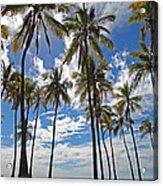Big Island Hawaii Palm Stretch Acrylic Print