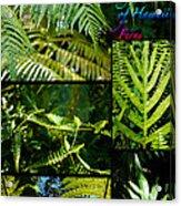 Big Island Of Hawaii Ferns 2 Acrylic Print by Colleen Cannon