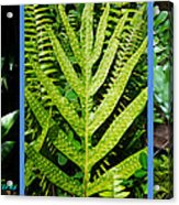 Big Island Of Hawaii Ferns Acrylic Print by Colleen Cannon