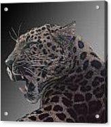Big Kitty Kitty Acrylic Print
