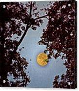 Big Old Autumn Moon Acrylic Print