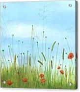 Big Orange Poppies Acrylic Print by Cecilia Brendel