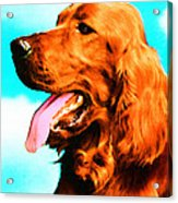 Big Red - Irish Setter Dog Art By Sharon Cummings Acrylic Print by Sharon Cummings