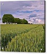 Big Sky Montana Wheat Field  Acrylic Print