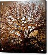 Big Tree Acrylic Print