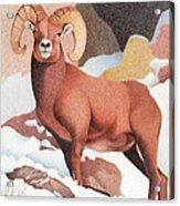 Bighorn Sheep Winter Acrylic Print