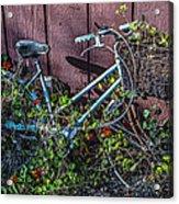 Bike In The Vines Acrylic Print