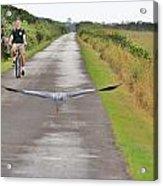 Biker And The Bird Acrylic Print