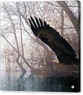 Bilbow's Eagle Acrylic Print