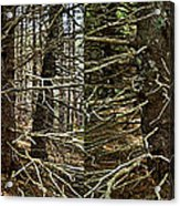 Billions Of Branches Acrylic Print