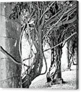 Biltmore Arbor Asheville Nc Acrylic Print