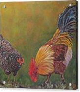 Biltmore Chickens  Acrylic Print