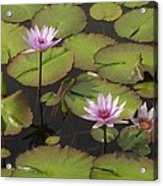 Biltmore Water Lillies Acrylic Print