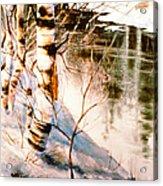 Birch By Stream Acrylic Print