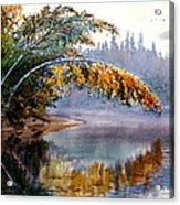 Birch Creek Beauty Acrylic Print