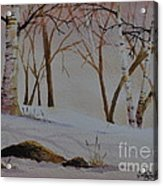 Birch Drift Acrylic Print