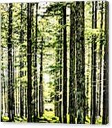Birch Forest Fractal Acrylic Print