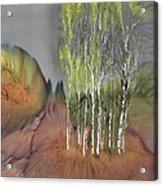Birch Grove 1 Acrylic Print by Carolyn Doe