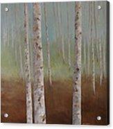 Birch In The Mist Acrylic Print