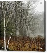 Birch In Winter Acrylic Print