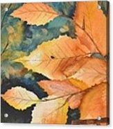 Birch Leaves Acrylic Print