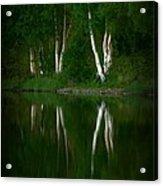 Birch Reflection Acrylic Print