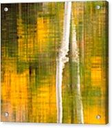 Birch Reflections Acrylic Print