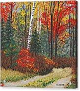 Birch Trail Acrylic Print